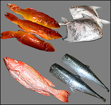 WHOLESALER OF SEAFOOD PRODUCTS